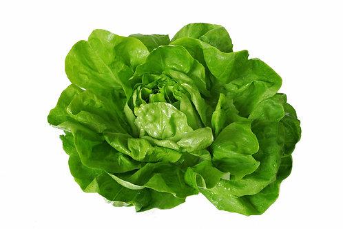 Bio Kopfsalat grün, Stk.