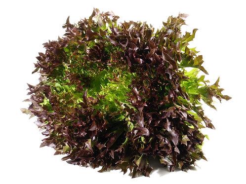 Bio Salanova Crispy rot, Stk.