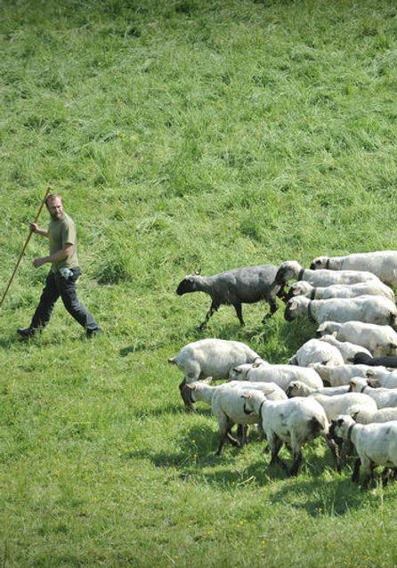 ex_140_Herdenschutzhund.jpg