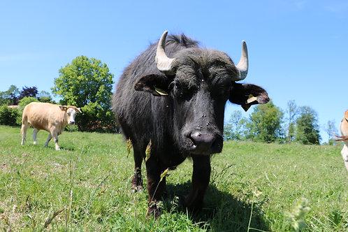Mischpaket vom Büffel
