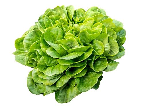 Bio Salanova grün, Stk.