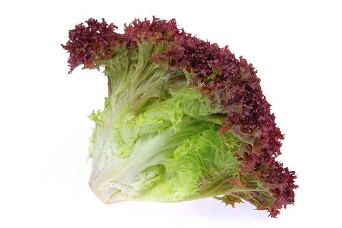 Bio Salat Lollo rot, Stk.