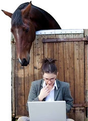 Equestrian searching for business solutions