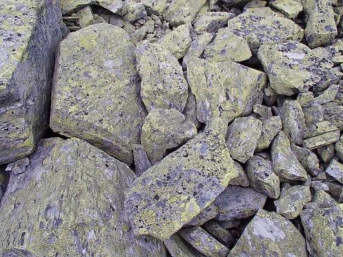 lichen in norway