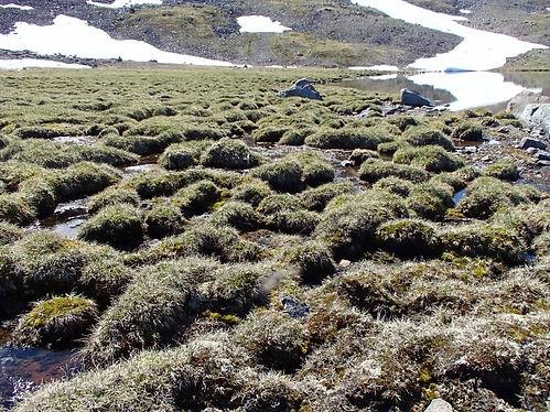 greenlandic swamp