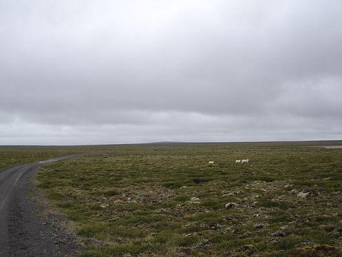 grass fields in iceland