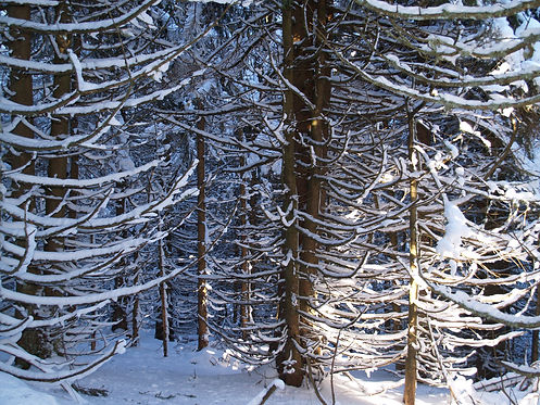 winter hike in the vosges