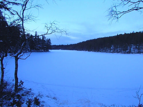 Forest of oslo in the winter
