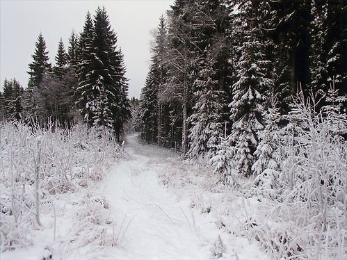 winter hike near olso