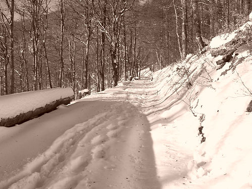 snow in the vosges