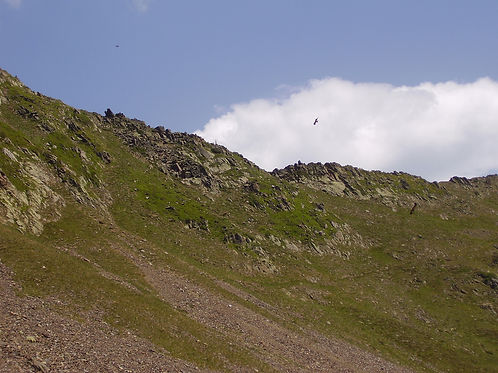 Vultures Tourmalet