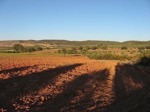 olive fields spain