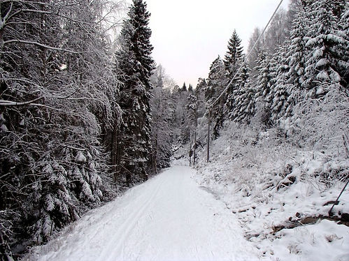 cross country skiing in