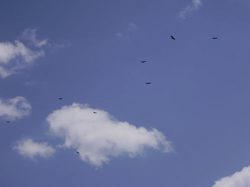 Vultures on the tourmalet