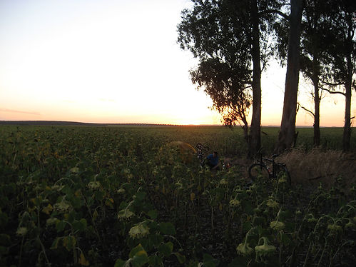 camping in beween sunflowers