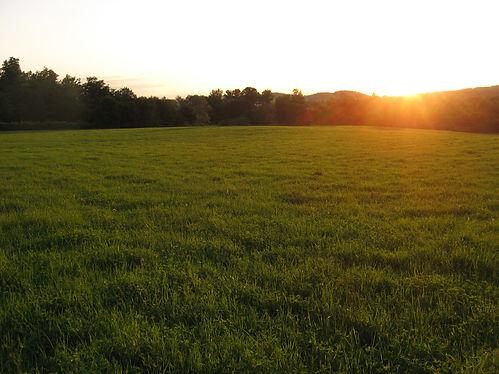 sun setting over a grass field