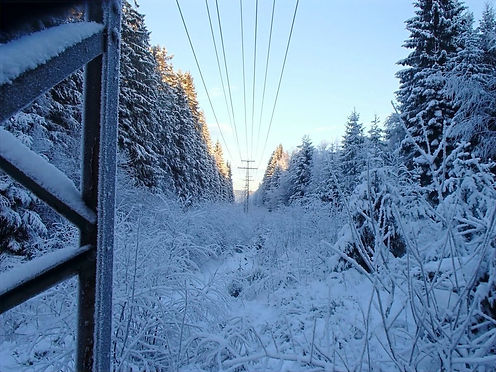 elecric wires in the snow