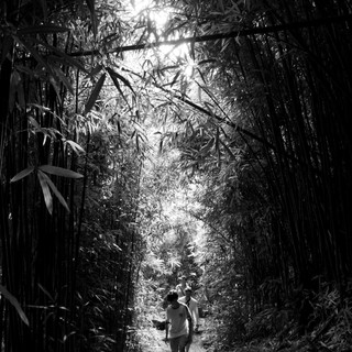 bambu2.jpg