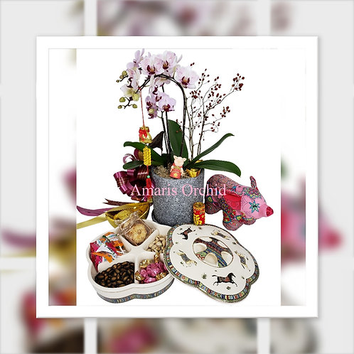 農曆新年禮物籃 B: 3株蝴蝶蘭 + 陶瓷全盒連食品( HAMPER B: CNY Phalaenopsis Orchid x 3 + Gift Set