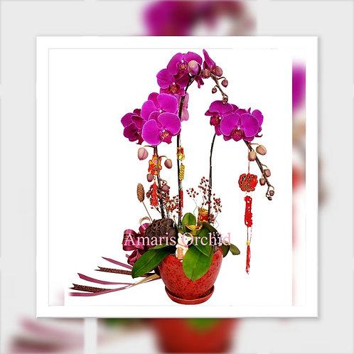 新春蘭花 3株蝴蝶蘭 Chinese New Year  Orchid Phalaenopsis x3