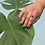 Thumbnail: Plant Grandbabies by Sam