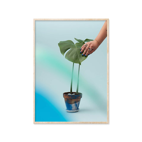 Plant Grandbabies by Sam
