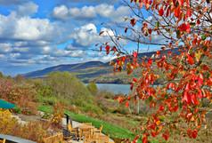 Autumn Patio View