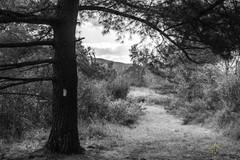 Gery scale path photo