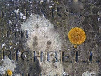 Rare lichens found in St Mary's graveyard