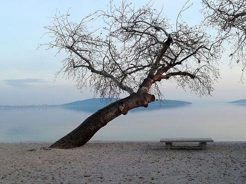 tree-2512773_1280.jpg