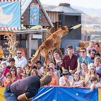 dog show 1.jpg