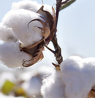 cotton-round_1.png