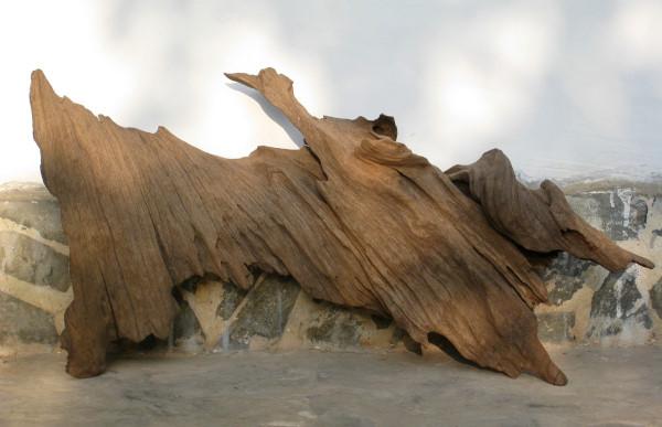 Driftwood. Photo: Jessica Groenendijk