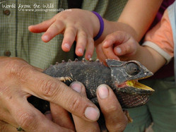 A Child's Right to Hands-On Nature