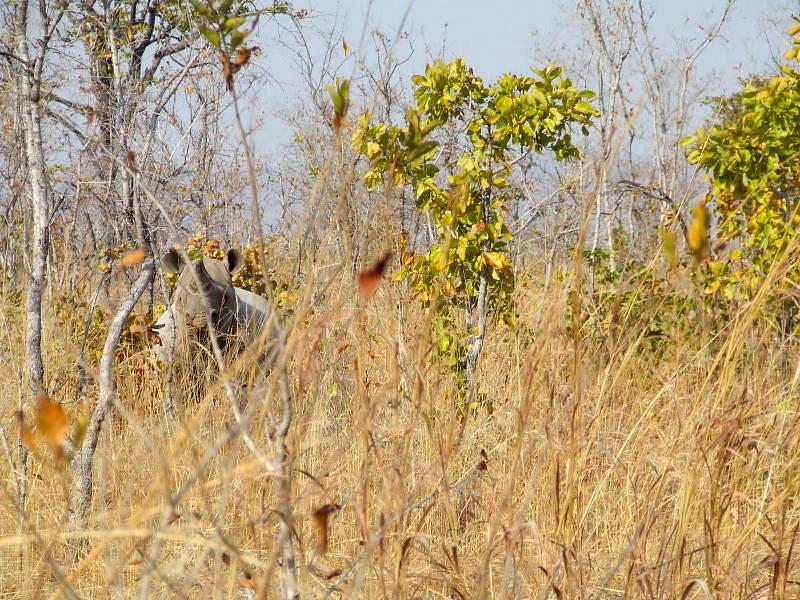 Peekaboo! An alert Buntungwa. Photo: Jessica Groenendijk