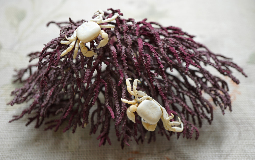 White crabs. Photo: Jessica Groenendijk, Words from the Wild