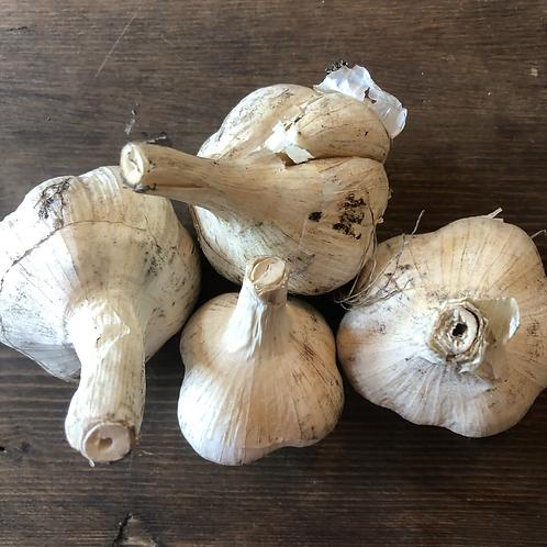 Large Hardneck Garlic