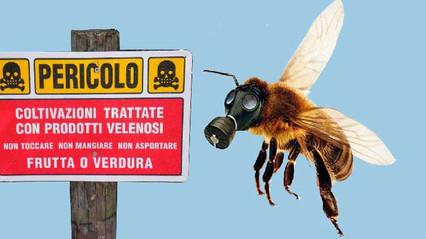 Salviamo le api! L'appello della Scuola San Vito