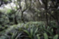 Ferns Stewart Island
