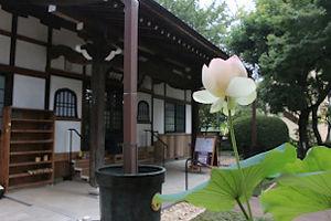 HOME_Flower with keidaiback.JPG