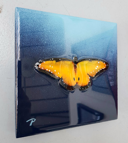 "Yellow on blue butterfly 7""×7"""
