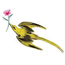 oiseau-2.jpg
