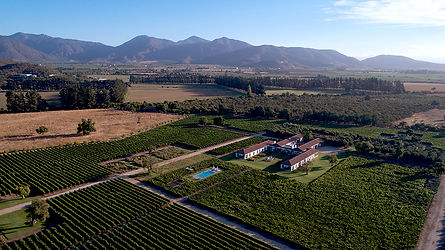 Photo Vineyards.jpg
