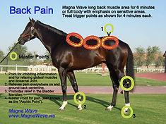 magnawave equine.jpg