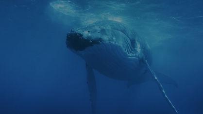 VGP_Dark_Whale.jpg