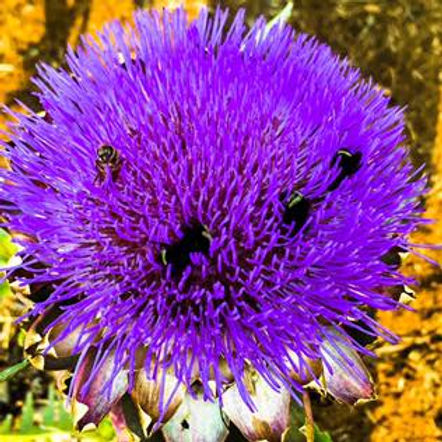 Flower_Bee.jpg