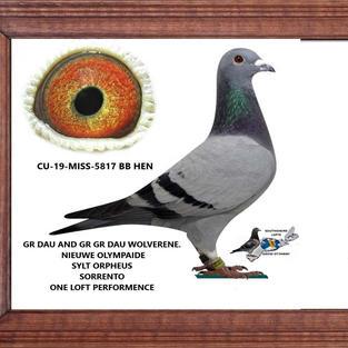 CU 19 MISS 5817 BB HEN.