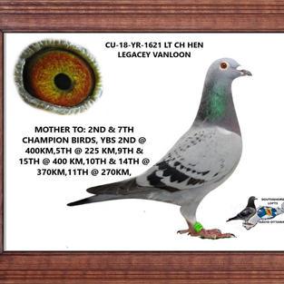 CU 18 YR 1621 LT CH HEN.