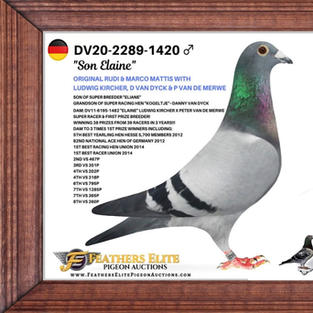 DV 20 2289 1420 BB COCK.jpg