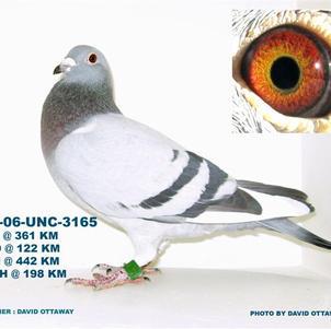 CU-06-UNC-3165 .jpg